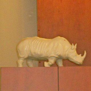 expo credit du nord clermont rhinoceros blanc